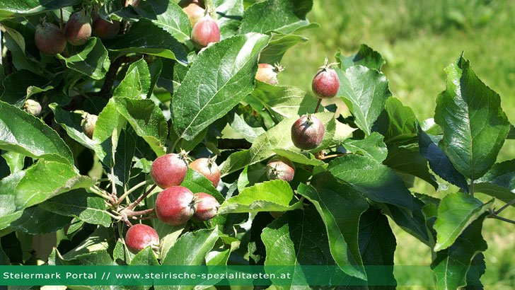 Obst Apfel Importstopp Russland