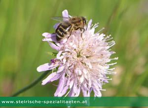 Biene auf Blume Pestizidverbot