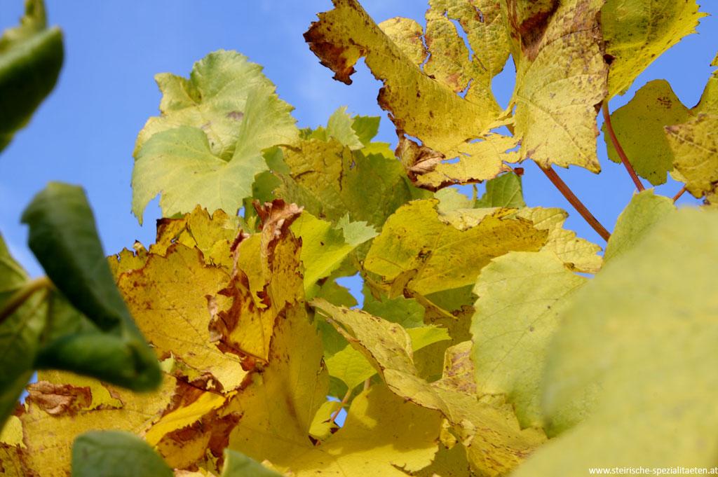 Bunte Blätter Herbst