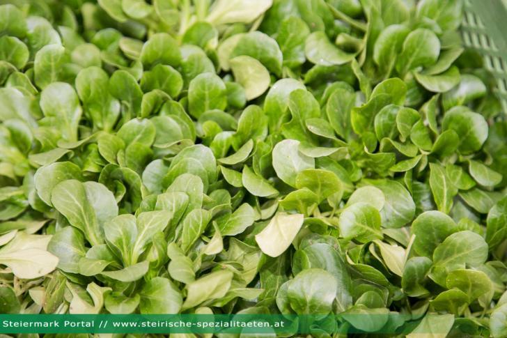 Vogerlsalat Feldsalat