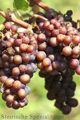 Grauburgunder - Weintrauben
