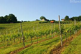 Weinberge an der südoststeirischen Hügelland Weinstraße