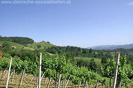 Weinberge bei Eichberg an der Südsteirischen Weinstraße