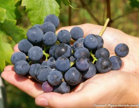Qualitätsstufen des österreichischen Weines