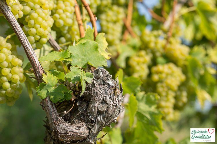 Weingeschichte Steiermark