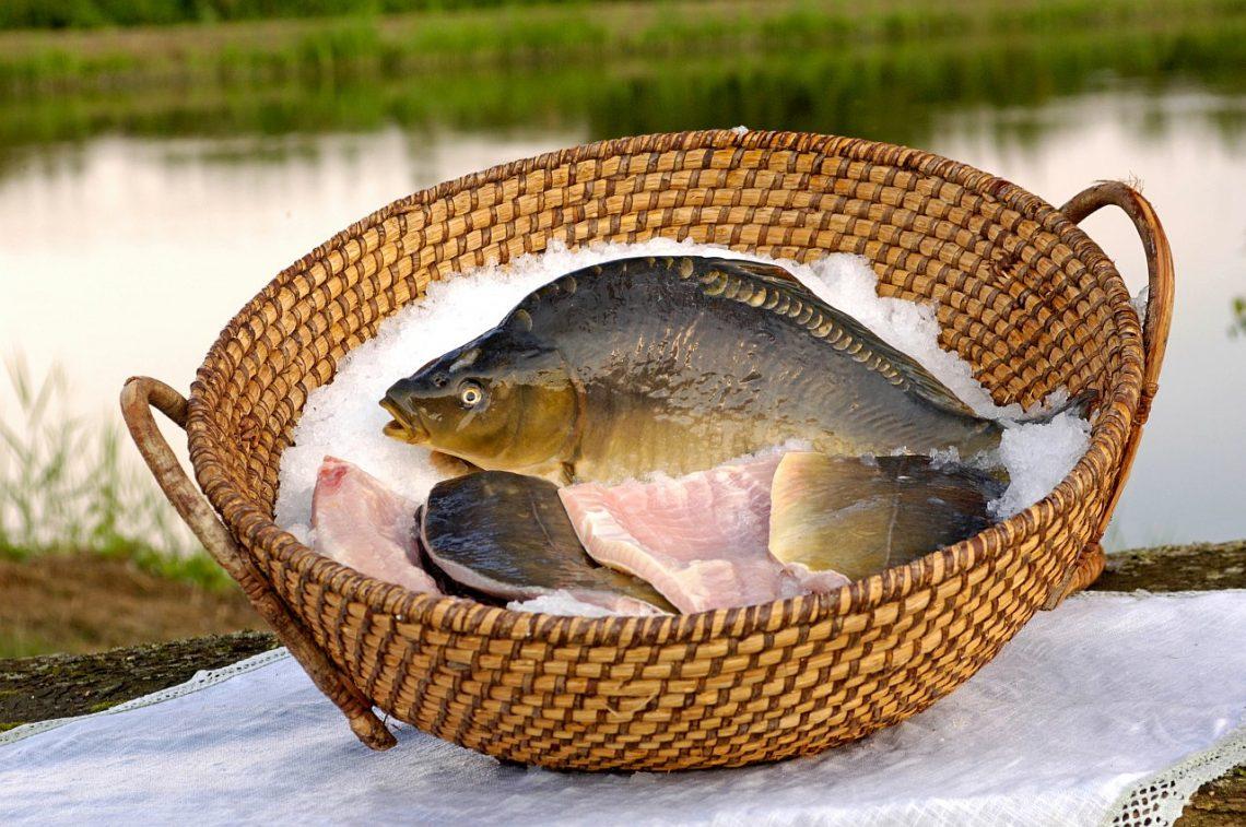 Steirisches Teichland Karpfen