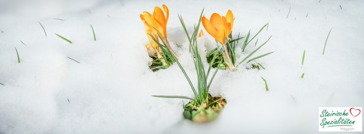 Frühlingsbeginn Österreich
