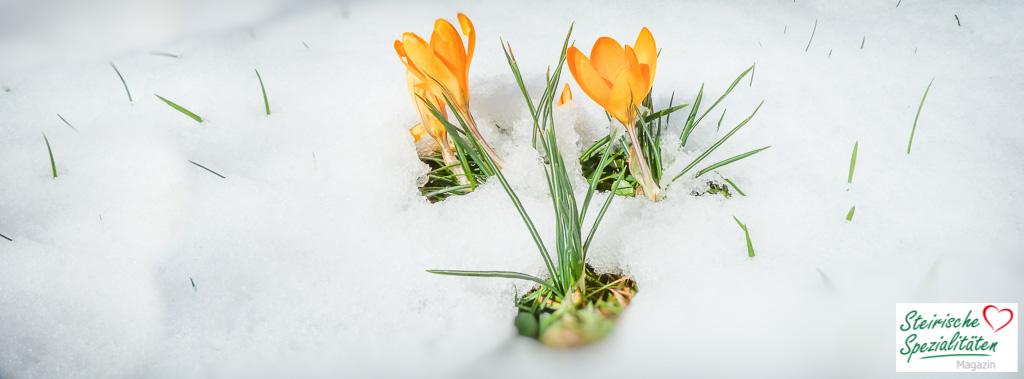 Frühlingsbeginn in der Steiermark