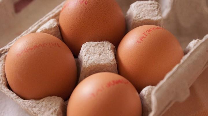 Was steht auf dem Ei? – Österreichische Eierdatenbank