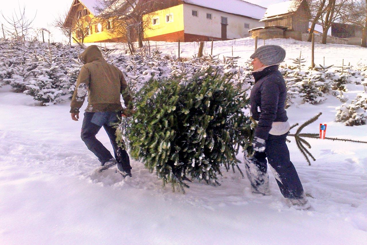 österreich Weihnachtsbaum.Beliebteste Weihnachtsbäume In österreich