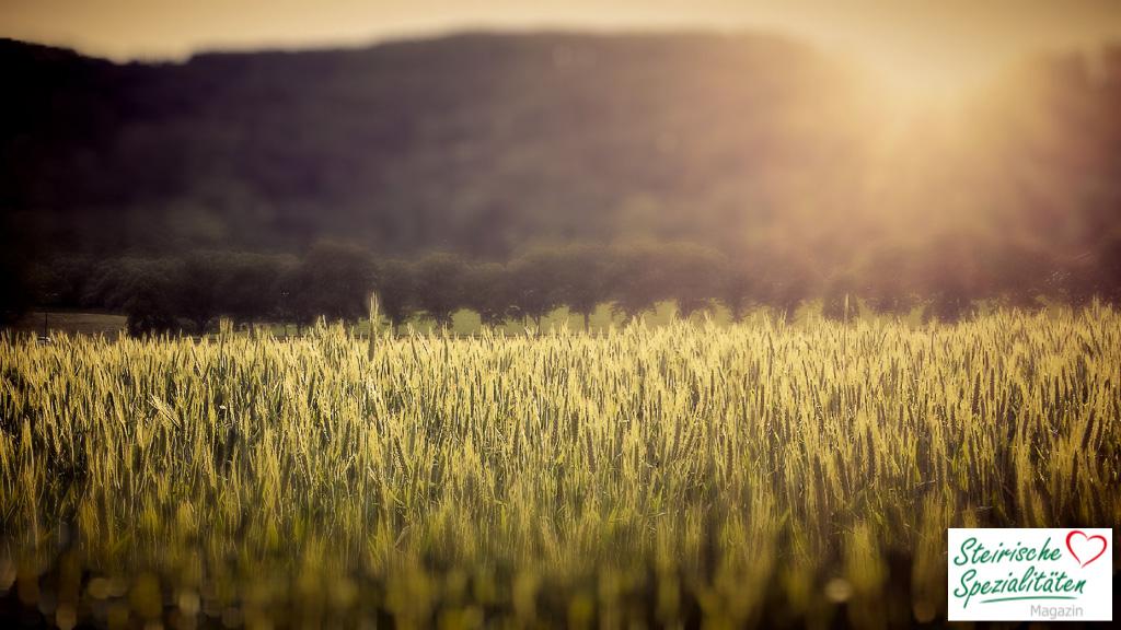 Umweltfreundlich die Steiermark mit dem Rad erkunden