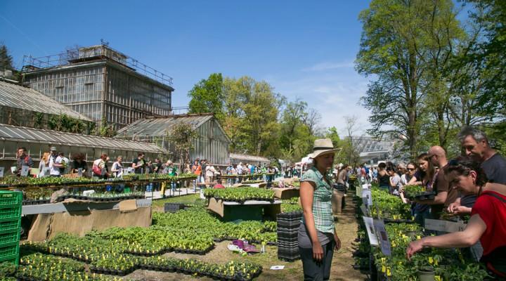 Jungpflanzenmarkt im Botanischen Garten