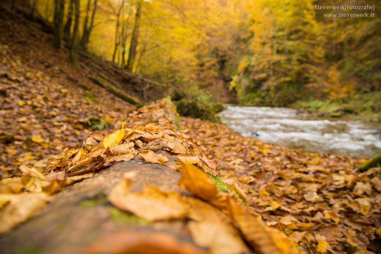 Deutschlandsberg Klause Blätter im Herbst