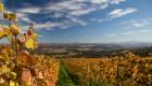 Morillon (Chardonnay)