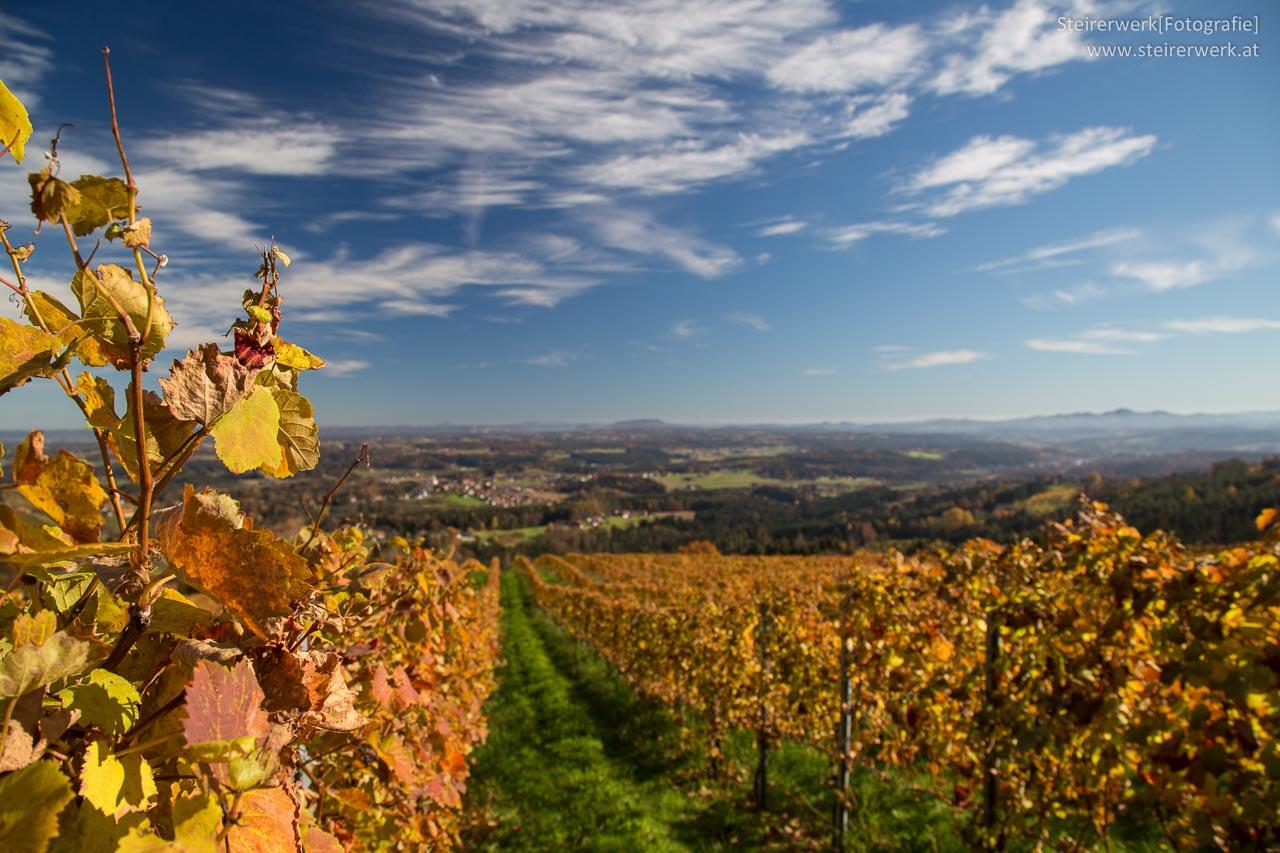 Schilcher Weinstraße Herbst