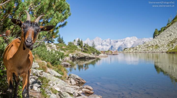 Wanderausflug zum Spiegelsee mit Traumblick auf den Dachstein