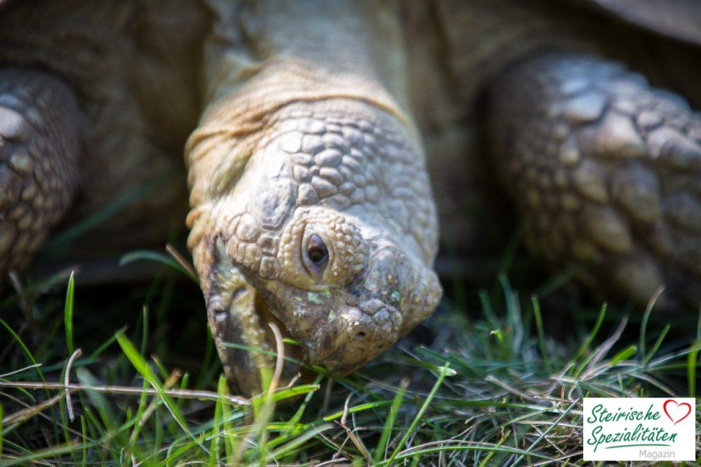 Schildkröte Tierpark