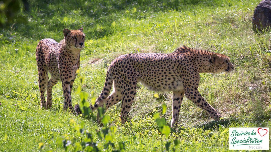 Tierwelt Tierpark Herberstein