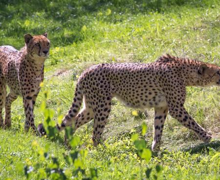 Tierpark Herberstein: Tierwelt Ausflug für die ganze Familie