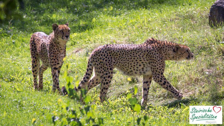 Tierwelt Herberstein Tierpark