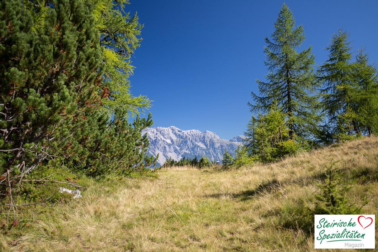 Reiteralm Wandern Dachstein