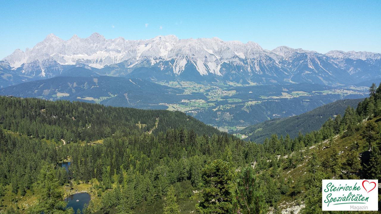 Wald Berg See