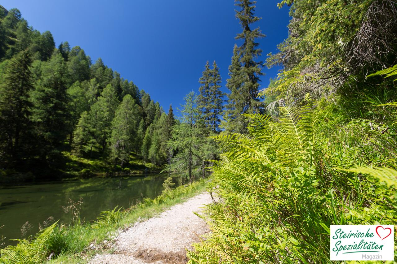 Wandern Alm Österreich