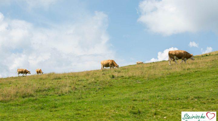Almo Rindfleisch aus der Steiermark – Almochsenfleisch für Genießer