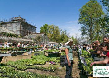 Pflanzen Raritätenmarkt der Arche Noah im Botanischen Garten