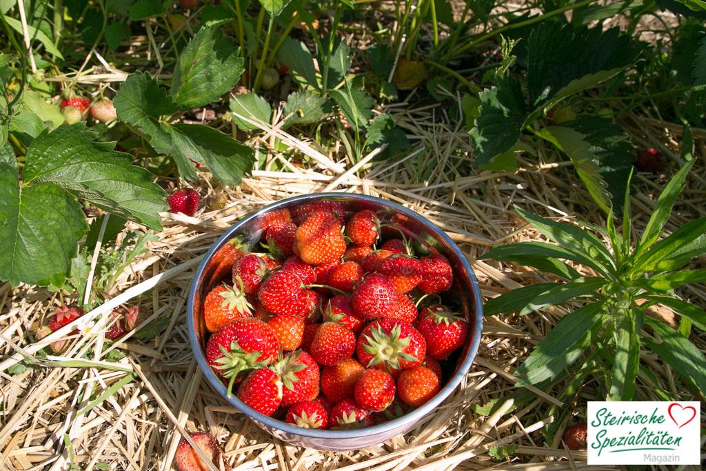 erdbeersaison in der steiermark frische erdbeeren aus der region. Black Bedroom Furniture Sets. Home Design Ideas