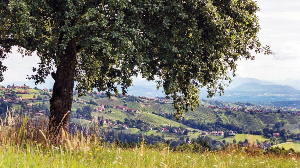 Weingärten Hochgrail bei 9 Plätze 9 - Schätze