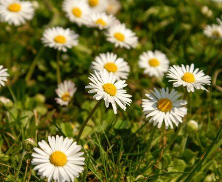 5 beliebte Frühlingsrezepte