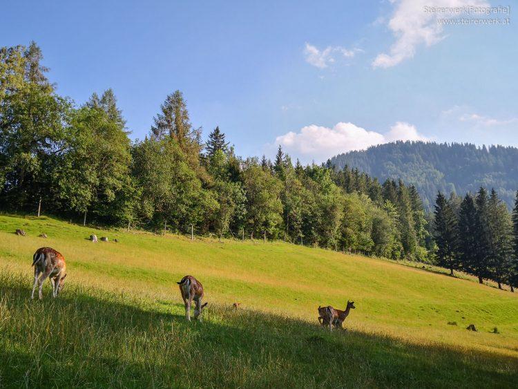 Heimische Tiere im Almenland