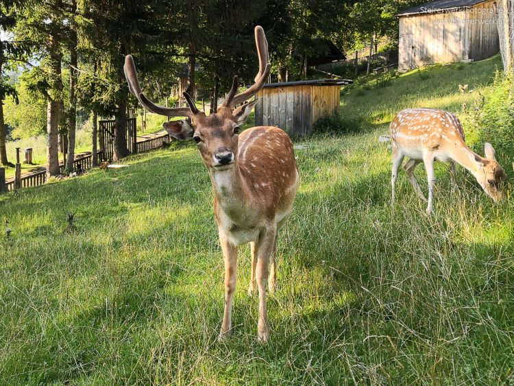 Tiere im Ökopark Hochreiter