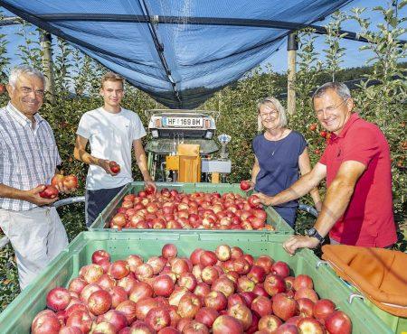Steirische Apfelernte 2020 fällt durch Frost geringer aus