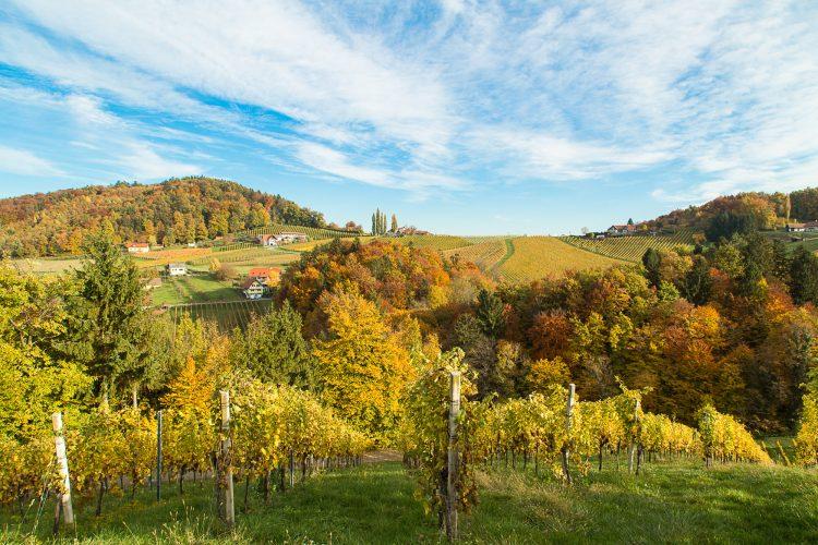 Südsteiermark Herbstfoto