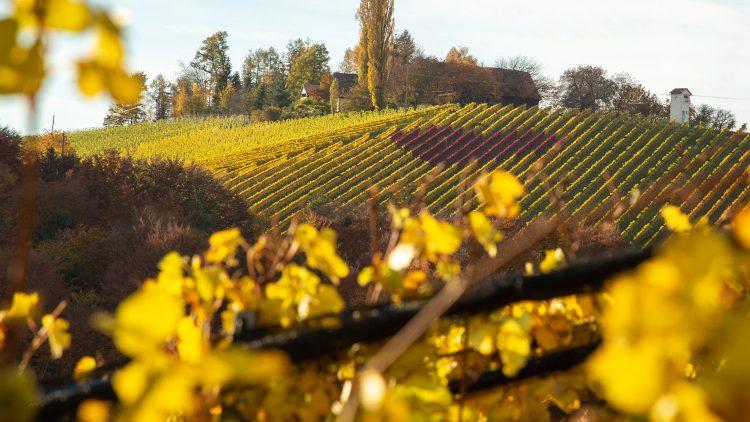 Weinherz in der Südsteiermark im Herbst