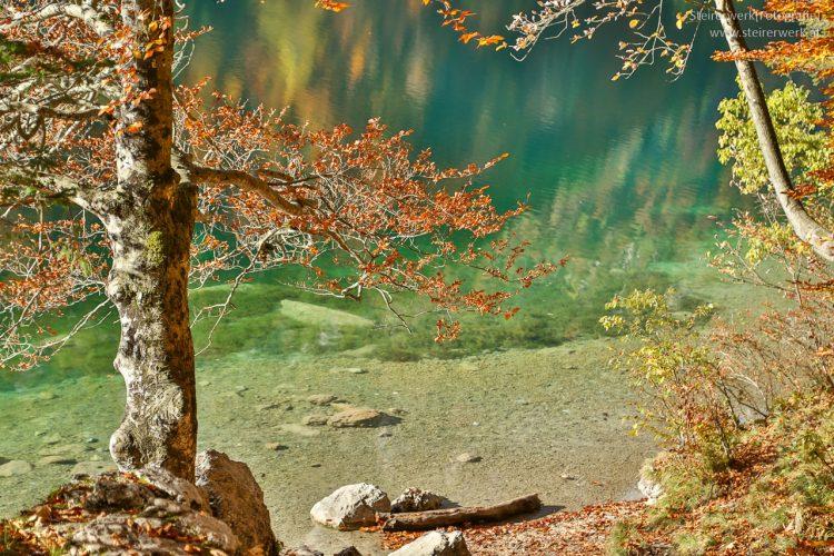Natur am Leopoldsteinersee
