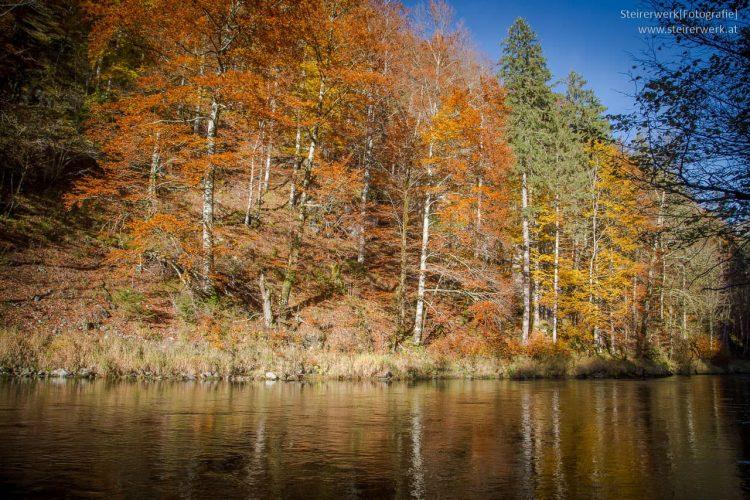 Salza Wildalpen Herbst Bäume